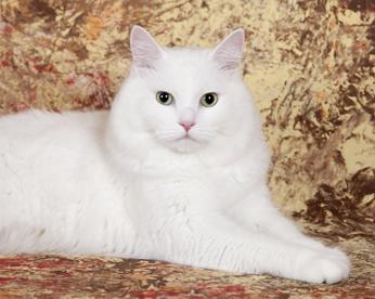 Приметы про кота белого